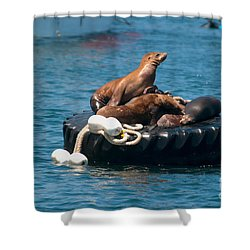Monterey Harbour Shower Curtain by Carol Ailles