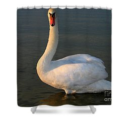 Shower Curtain featuring the photograph Swan by Odon Czintos