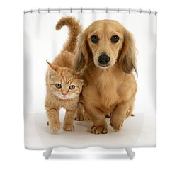 Kitten And Puppy Shower Curtain by Jane Burton