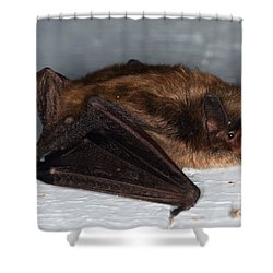 Little Brown Bat Shower Curtain by Ted Kinsman