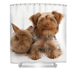Puppy And Rabbit Shower Curtain by Mark Taylor