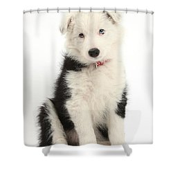 Border Collie Puppy Shower Curtain by Mark Taylor