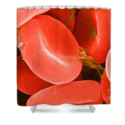 Red Blood Cells Sem Shower Curtain by Science Source