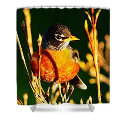 American Robin Shower Curtain by Paul Ge