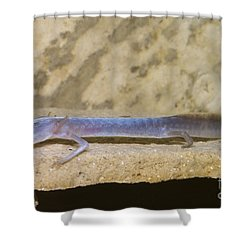 Austin Blind Salamander Shower Curtain by Dante Fenolio