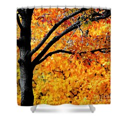 Blaze Shower Curtain by Optical Playground By MP Ray
