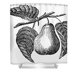 Botany: Pear Shower Curtain by Granger
