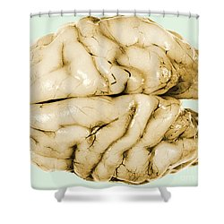 Brain Shower Curtain by Science Source