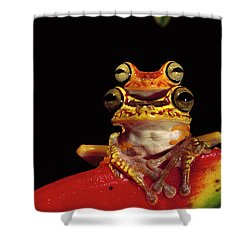 Chachi Tree Frog Hyla Picturata Pair Shower Curtain by Pete Oxford