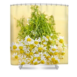 Chamomile Flowers Shower Curtain by Elena Elisseeva