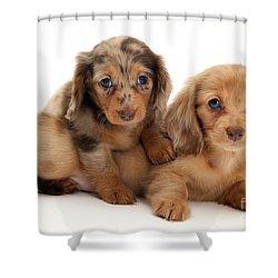 Dachshund Pups Shower Curtain by Jane Burton