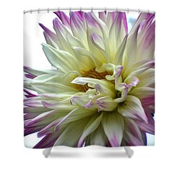 Shower Curtain featuring the photograph Dahlia by Katy Mei