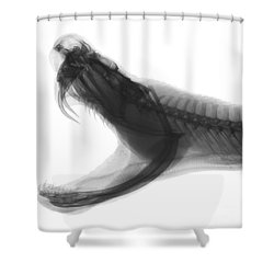 Eastern Diamondback Rattlesnake, X-ray Shower Curtain by Ted Kinsman