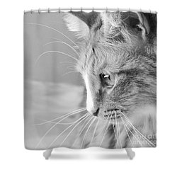 Black And White Cat Portrait Shower Curtain