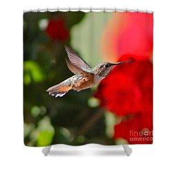 Hummingbird 3 Shower Curtain