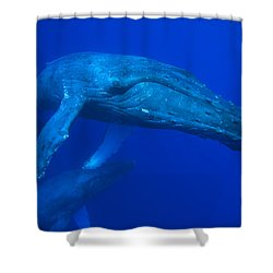 Humpback Whale Underwater Hawaii Shower Curtain by Flip Nicklin