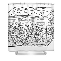 Illustration Of Stratified Squamous Shower Curtain by Science Source