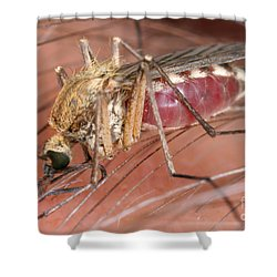 Mosquito Biting A Human Shower Curtain by Ted Kinsman