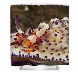 Nudibranch With Orange Emperor Shrimp Shower Curtain by Mathieu Meur