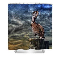 Shower Curtain featuring the photograph Pelican At Sunset by Dan Friend