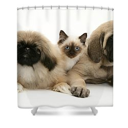 Puppies And Kitten Shower Curtain by Jane Burton