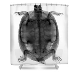 Red-eared Slider Turtle X-ray Shower Curtain by Ted Kinsman