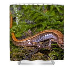Seepage Salamander Shower Curtain