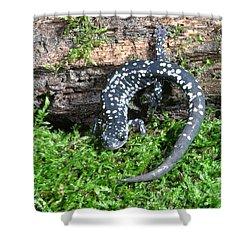 Slimy Salamander Shower Curtain
