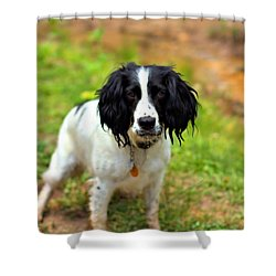 Spaniel Shower Curtain