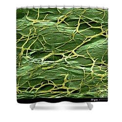 Staghorn Fern, Sem Shower Curtain by Ted Kinsman