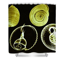 Tun Shell X-ray Shower Curtain by Photo Researchers
