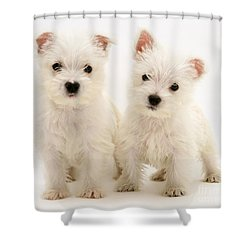 West Highland White Terriers Shower Curtain by Jane Burton