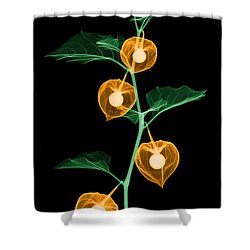 X-ray Of Chinese Lantern Plant Shower Curtain by Ted Kinsman