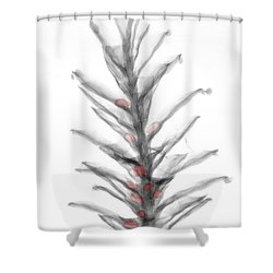 X-ray Of Pinecone With Seeds Shower Curtain by Ted Kinsman
