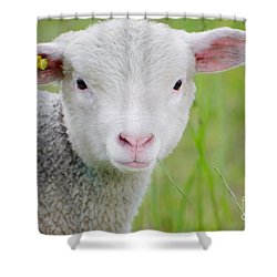 Young Sheep Shower Curtain