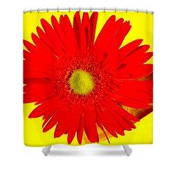 2024a2-001 Shower Curtain by Kimberlie Gerner