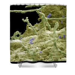 Blue Cheese Shower Curtain by Ted Kinsman
