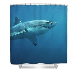 Great White Shark Carcharodon Shower Curtain by Mike Parry