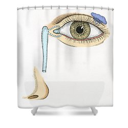 Illustration Of Tear Duct Shower Curtain by Science Source