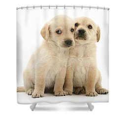 Labrador Retriever Puppies Shower Curtain by Jane Burton