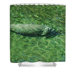 Manatee Shower Curtain by Randy J Heath