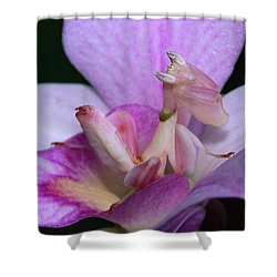 Orchid Mantis Hymenopus Coronatus Shower Curtain by Thomas Marent