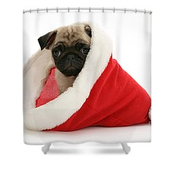 Pug Puppy Shower Curtain by Jane Burton
