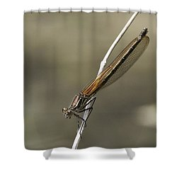 Shower Curtain featuring the photograph Red Bluet by Betty Depee