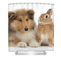 Rough Collie Pup With Rabbit Shower Curtain by Mark Taylor