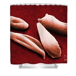Sickle Red Blood Cells Shower Curtain by Omikron