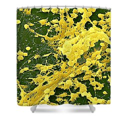 Staphylococcus Biofilm Shower Curtain by Science Source