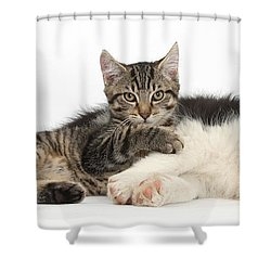 Tabby Kitten & Border Collie Shower Curtain by Mark Taylor