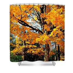 Shower Curtain featuring the photograph Tree Of Gold by Joe  Ng
