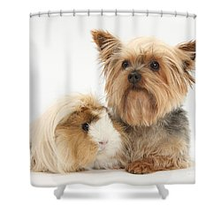 Yorkshire Terrier And Guinea Pig Shower Curtain by Mark Taylor